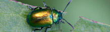 Photographs of beetles by Dave Kilbey