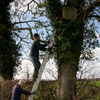 Barn Owl Box Maintenance