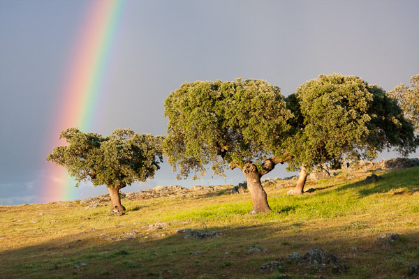 Rainbow in Extremadura - Spain - Photo by Dave Kilbey