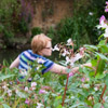 Removing Himalayan Balsam from a river bank people